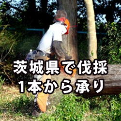 茨城の伐採・伐根